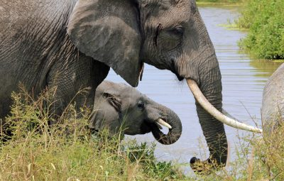 3nanrbtg32_Elephant_at_water
