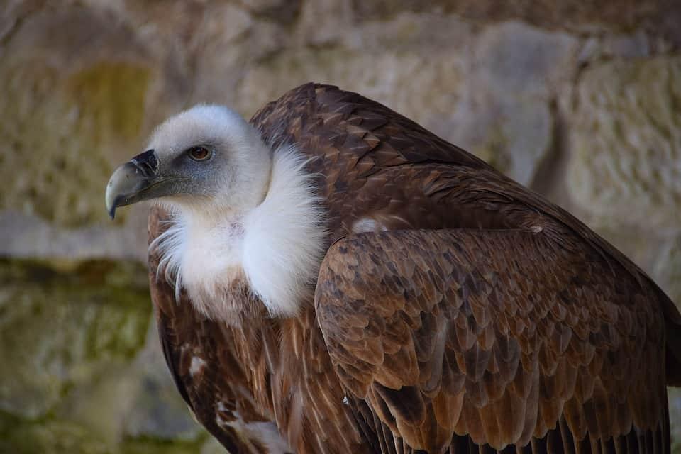 Γύπας Κρήτη: Απίστευτο τροχαίο με... το άγριο πτηνό (pic - vid) | Alphafreepress.gr