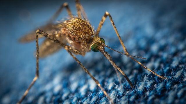 Κουνούπια και κορονοϊός