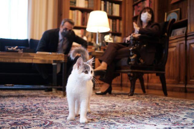 Κατερίνα Σακελλαροπούλου Κυριάκος Μητσοτάκης γάτα