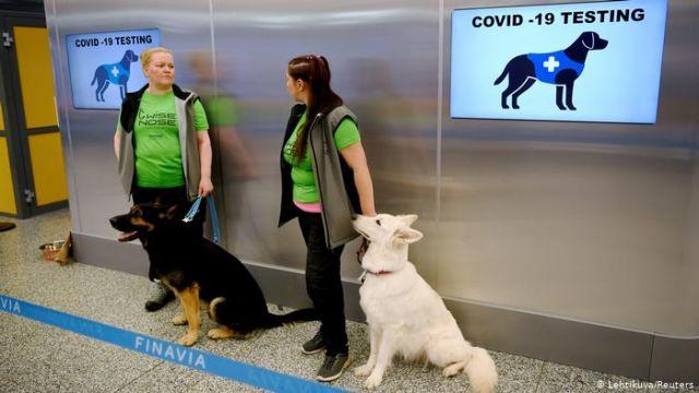 σκυλια για τεστ covid