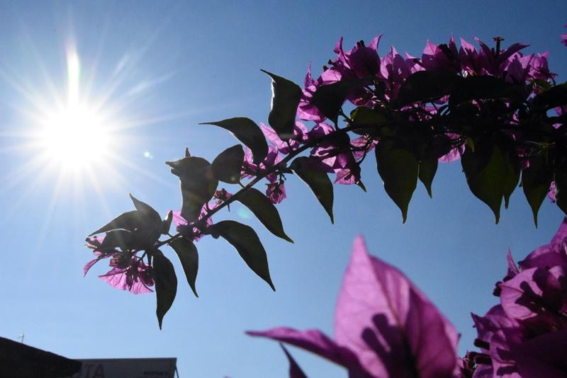 Ήλιος λουλούδια