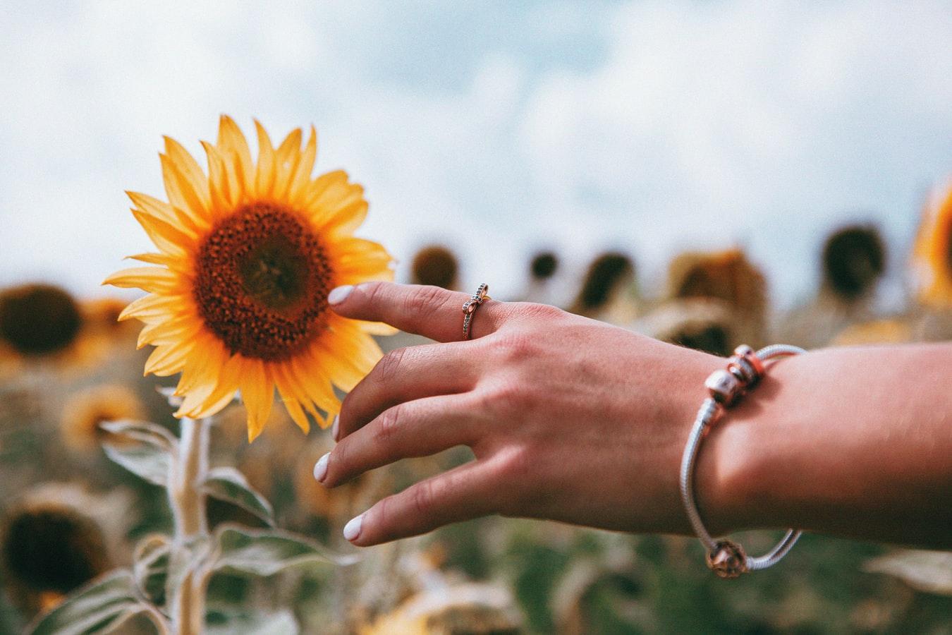 Χέρι κοπέλας μαργαρίτα