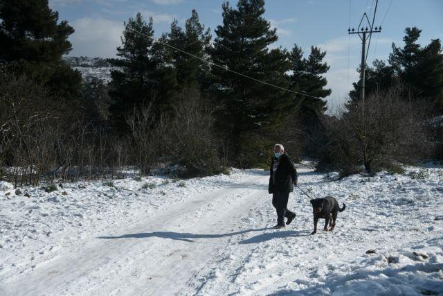 Βόλτα με τον σκύλο στα χιόνια