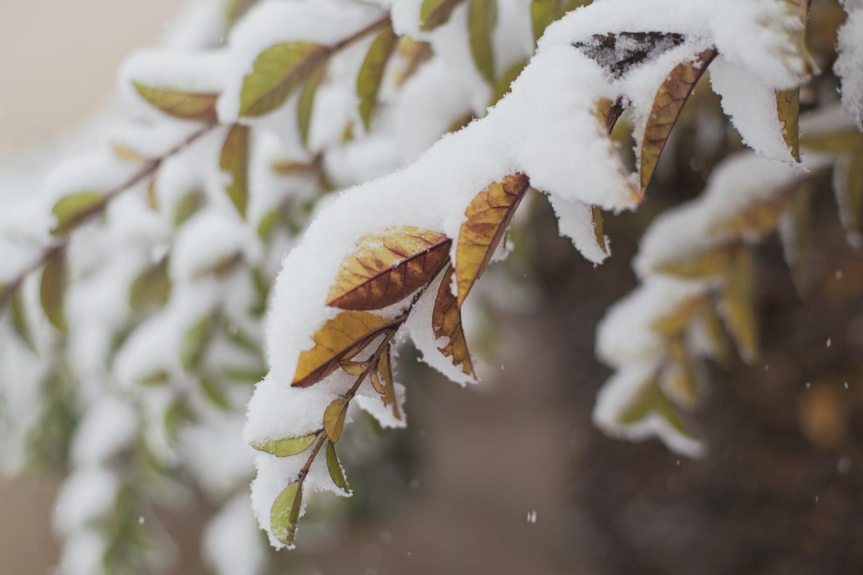 Χιόνια στα φύλλα
