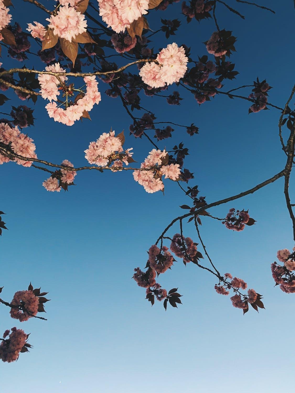 Λουλούδια κλαριά