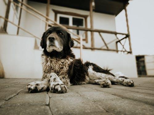Σκύλος κάθεται