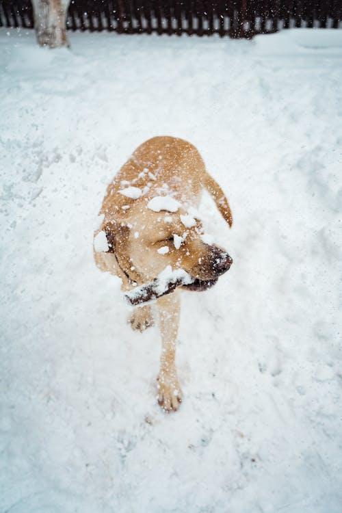 Σκύλος χιόνια