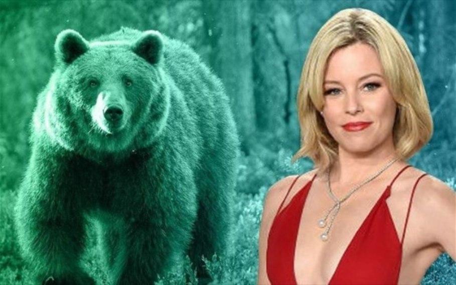 Ταινία αρκούδα