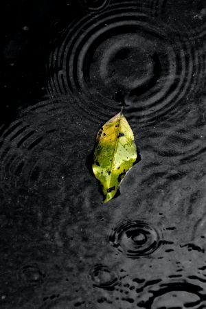 Φύλλο βροχή