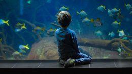 Ψάρια παιδί